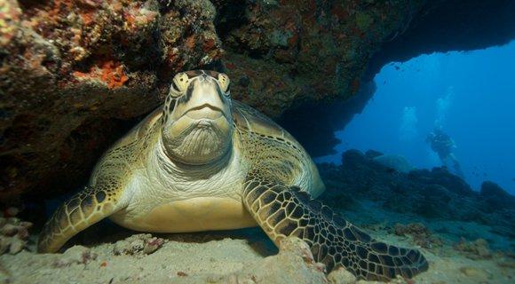 Turtle Marc