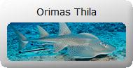Orimas_Thila