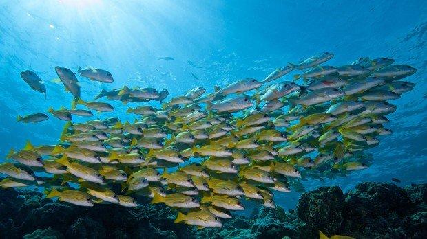 Maldives Scuba Diving South Ari
