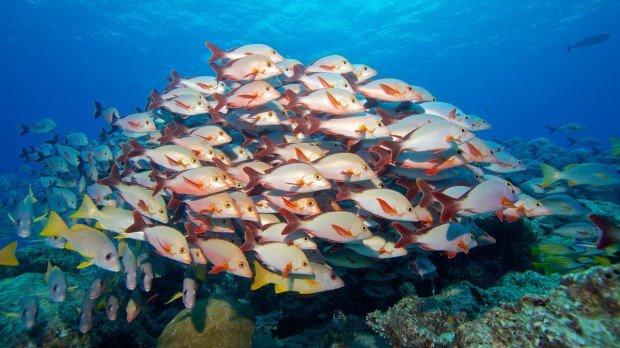 Maldives Snorkel Diving Kuredu