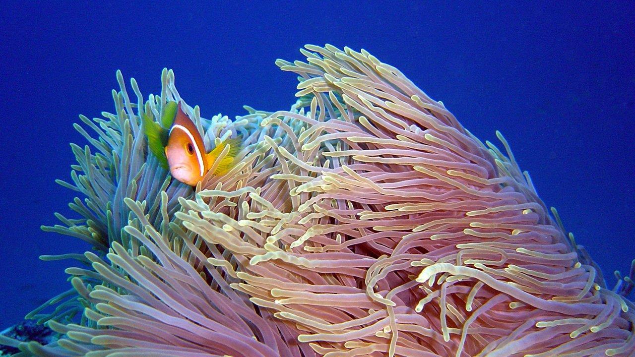 Maldives Snorkel Trip Kuredu Tinga