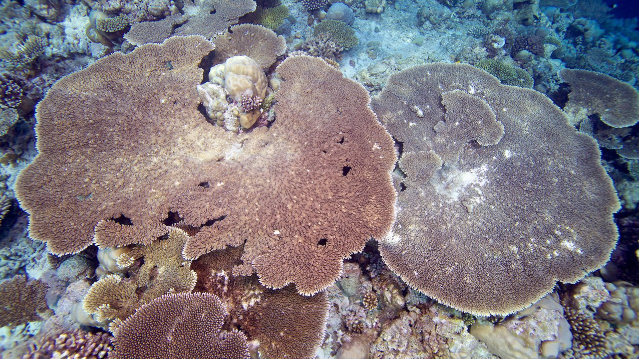 Maldives Snorkel Komandoo Kuredu