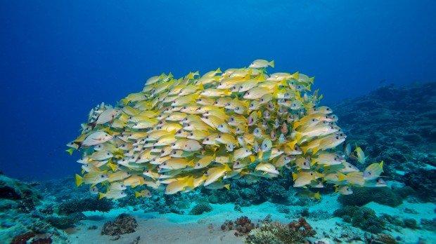 Maldives Snorkel Site Kuredu Veiyvah