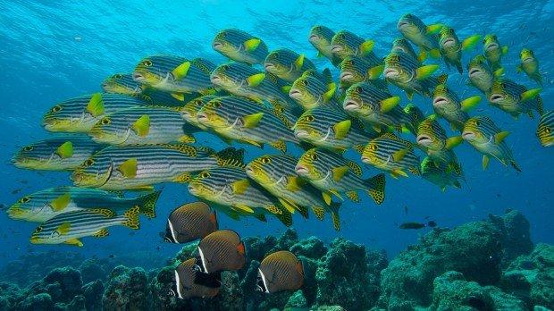 Maldives Snorkel Full Day Kuredu