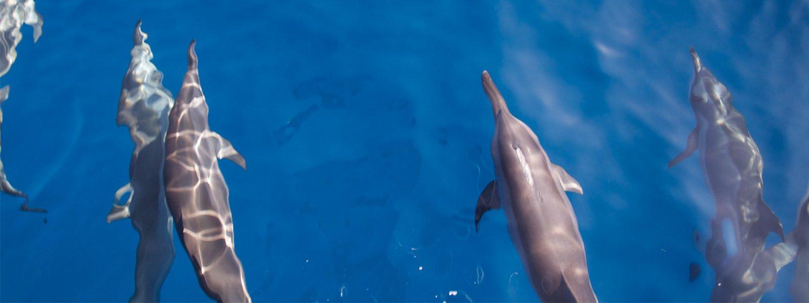 kuredu-sports-dolphins_1600x600