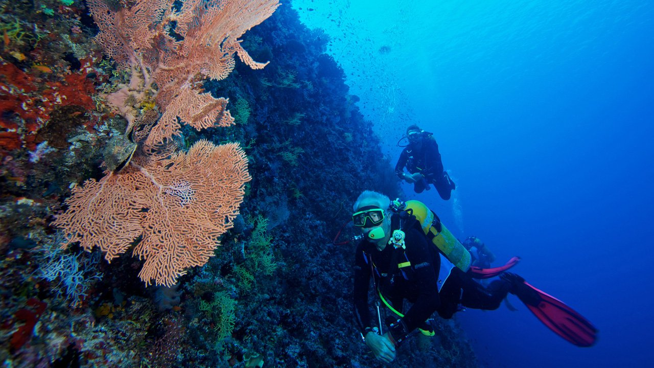 Scuba Diving Maldives Fan Corals
