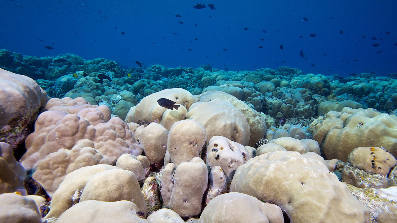 Scuba Diving Maldives Coral