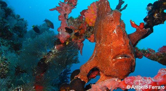 frogfish-vakaru-580x320-