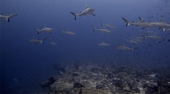 Andy-sharks-orimas-580x320