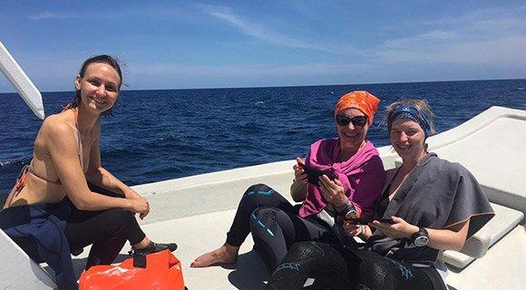 Sharks Survey Kuredu Maldives