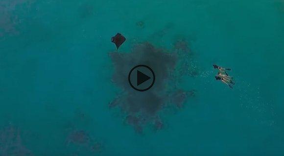 manta ray kuredu maldives
