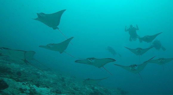 Scooter Diving Hurawalhi Prodivers – Dive the Maldives