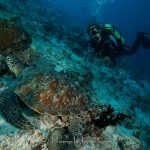 Kuredu Prodivers Scuba Diving Maldives