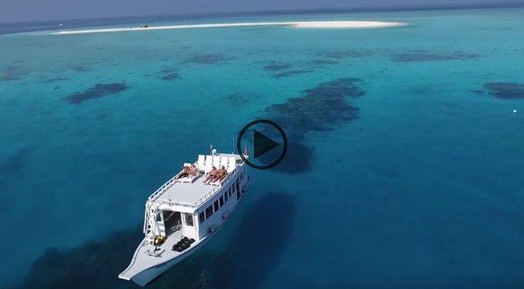 sharks and rays kuredu maldives