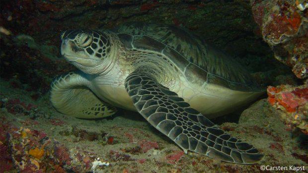 Kuredu - Dive the Maldives