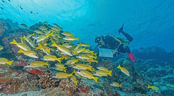 Kuredu Express - Dive the Maldives