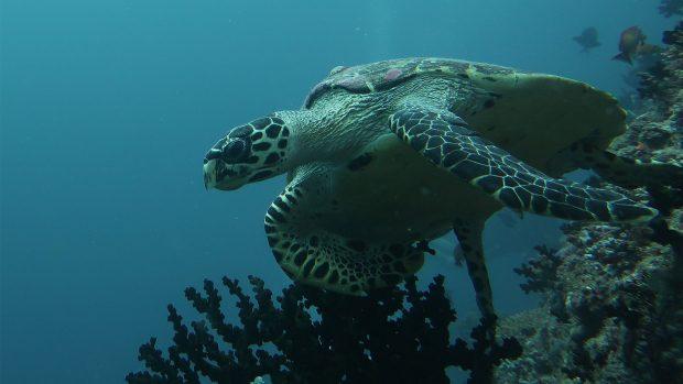 Lily Beach Maldives house reef
