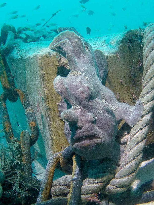 Frogfish Maldives Diving