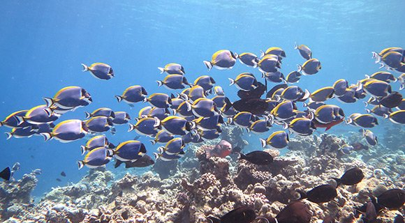 PD-blog_full-day-snorkel_3_580x320