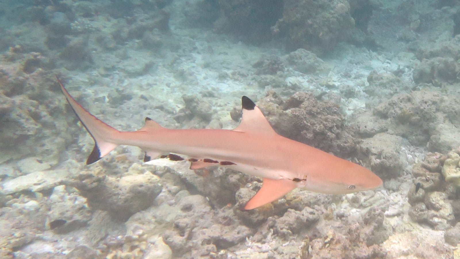 Lily Beach Maldives Marine Life In The Lagoon Snorkel