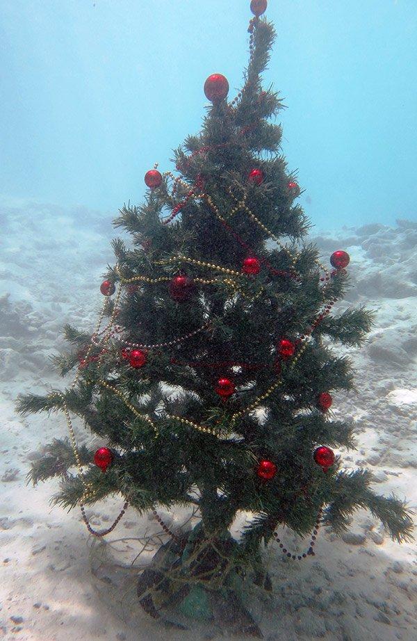 weihnachten unter wasser f r taucher auf lily beach malediven. Black Bedroom Furniture Sets. Home Design Ideas