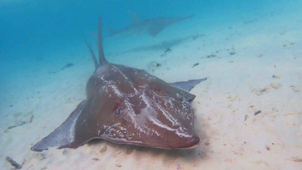Lily Beach Maldives Diving
