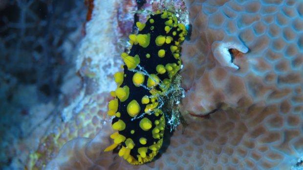 Scuba diving wreck Maldives