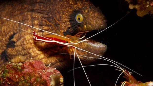 Moray Eel Scuba Diving Maldives