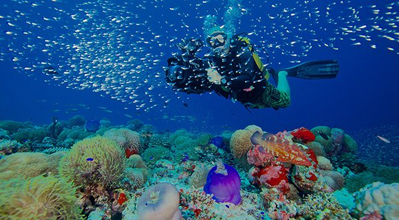 Maldives Scuba Diving Reefs