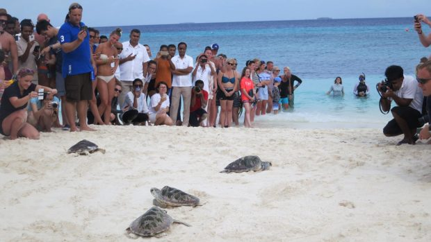 World Turtle Day maldives