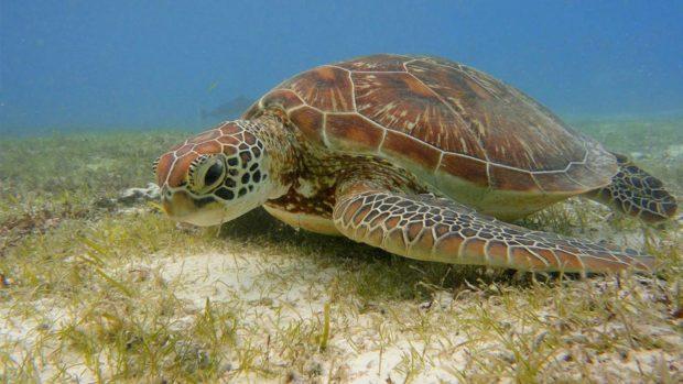World Turtle Day maldives