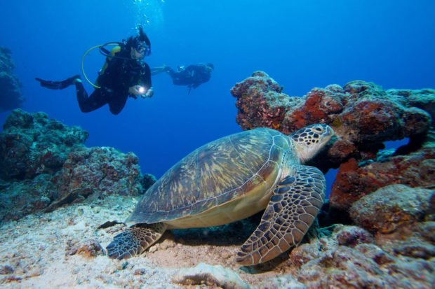 Maldives turtles diving