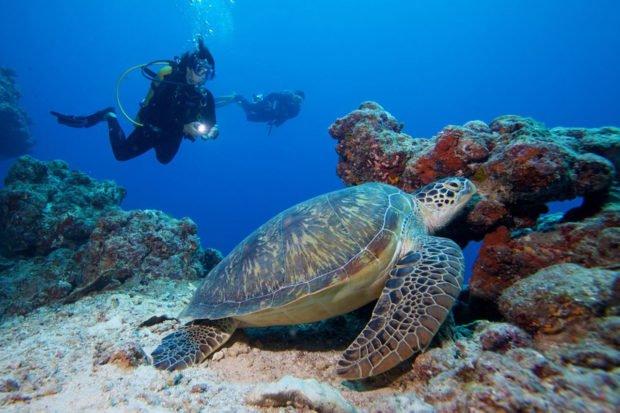 Maldives turtles diving