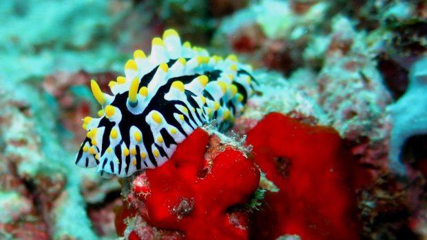 Macro diving Maldives