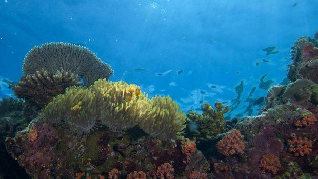 scuba diving reef Maldives