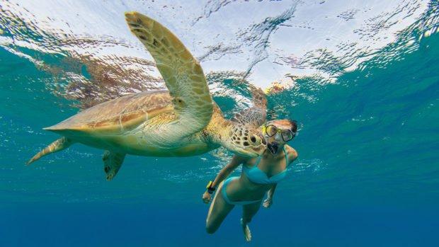 Innahura Maldives Snorkelling