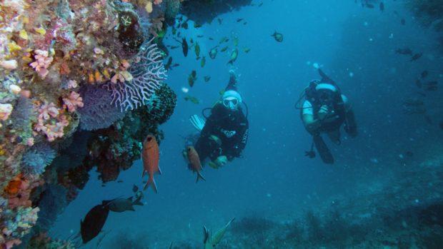Maldives Christmas Scuba Diving