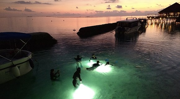 Maldives Night Snorkelling