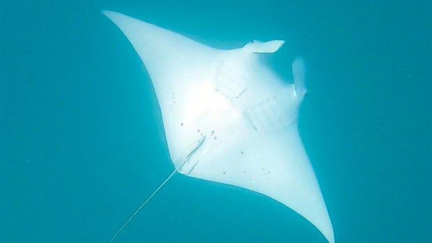 Manta Scuba Diving Maldives
