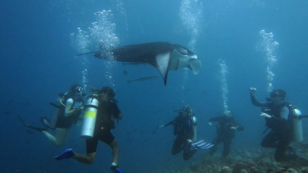 Manta diving Maldives