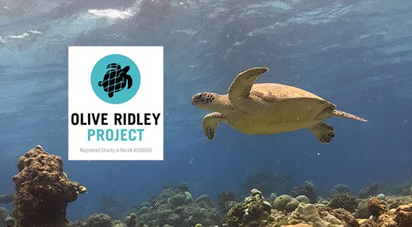 Maldives Sea Turtle Conservation