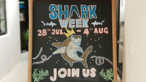 Shark Week celebrations Lily Beach Maldives