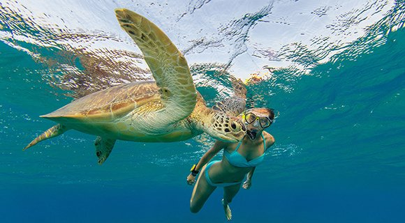Maldives snorkelling with turtle
