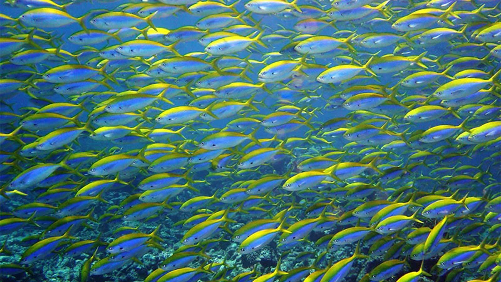 Maldives Marine Life Fusiliers