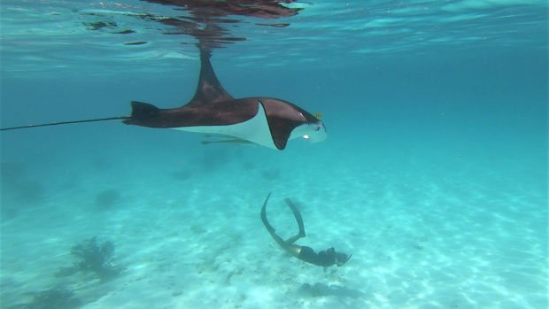 Marine Biology Maldives
