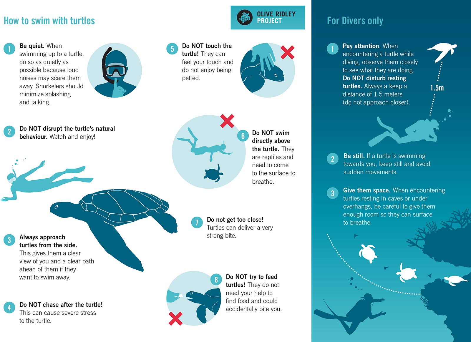 How to Swim With Turtles